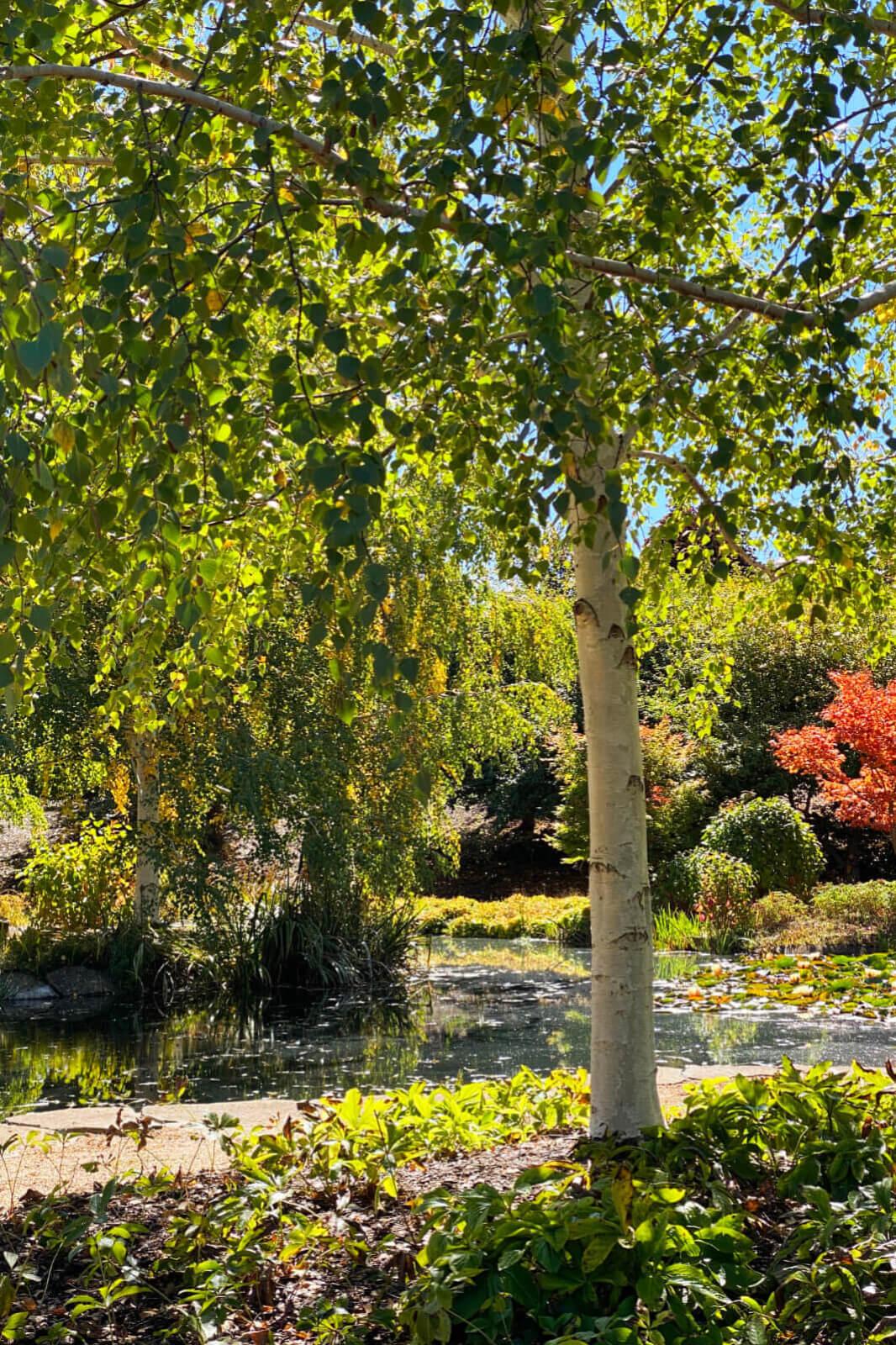 Mayfield Garden Autumn Festival